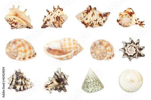 Set of shell. All in focus. High res. Isolated on a white backgr