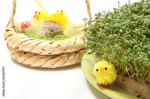 Easter chickens and green watercress on cotton pad