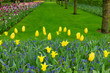 colorful flowerbeds with grass lane