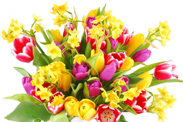 bouquet of tulip and daffodils flowers isolated on white