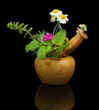 Mortar and pestle with fresh herbs on black background