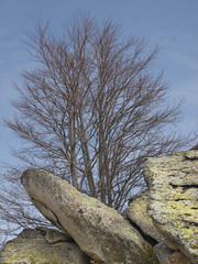 tree and stones with lichen
