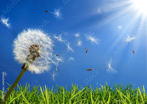 canvas print picture exclusive - allergy concept in spring