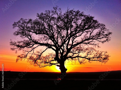 canvas print picture Big tree silhouette, sunset