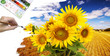 hand paint picture with sunflowers