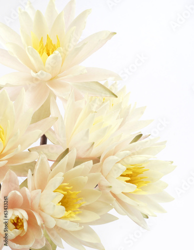 Bouquet of fresh water lilies  over white background