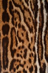 pelliccia di giaguaro