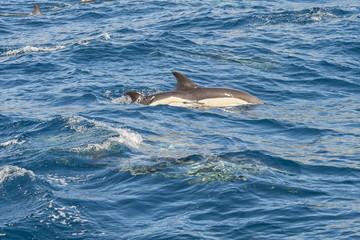 Delfini nell'oceano
