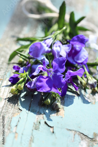 Pretty lobelia flowers on the old rustic wooden table
