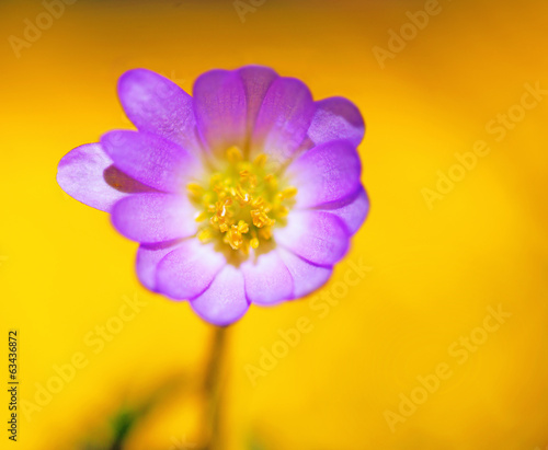 purple flower on yellow