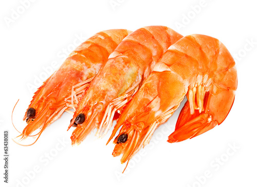 fresh shrimps isolated
