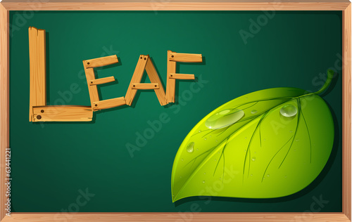 A blackboard with a leaf