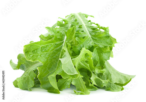Green lettuce salad fresh leaf