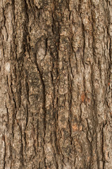 bark of tree texture