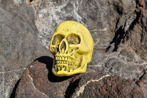 Ancient Vintage Human Skull Head