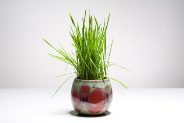 Easter still life with grass in a vase.