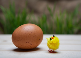 Easter still life with egg, grass on the background and chicken.
