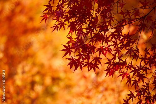 canvas print picture 河口湖の紅葉