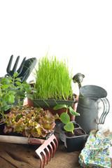 attrezzi giardinaggio e piantine orto verticale