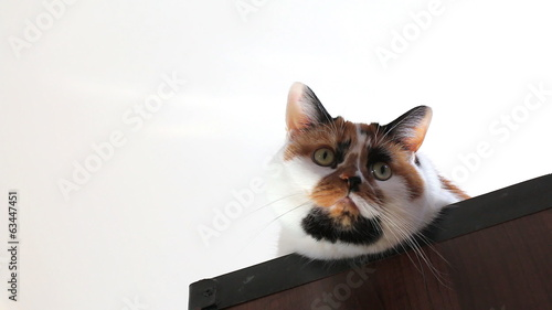 Close up of a curious calico cat head isolated on white