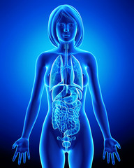 All organs of female body in blue