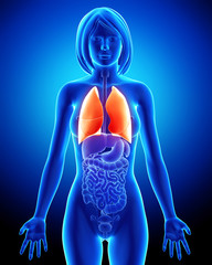 Anatomy of Female respiratory system with lungs in blue
