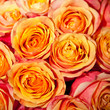 background orange roses