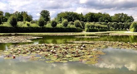 seerosen in einem park in bayreuth
