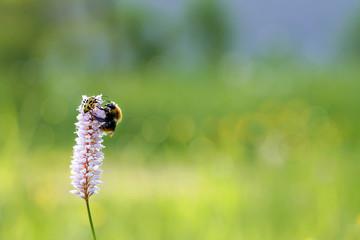 Насекомые в поле на цветке.
