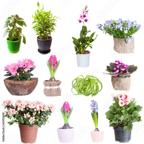 Deurstickers Azalea Set of houseplants on a white background