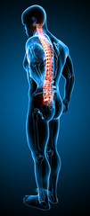 Anatomy of male back pain in blue