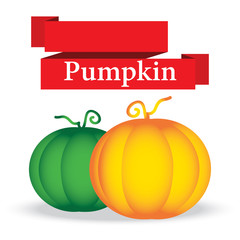 fresh pumpkin on white background vector