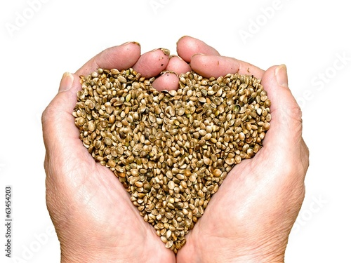 Hemp seeds held by hands shaping a heart isolated on white