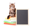 Kitten with chalkboard