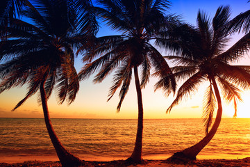 Tropic sunrise through coconut palms