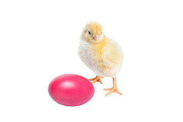 Cute baby chicken - easter background