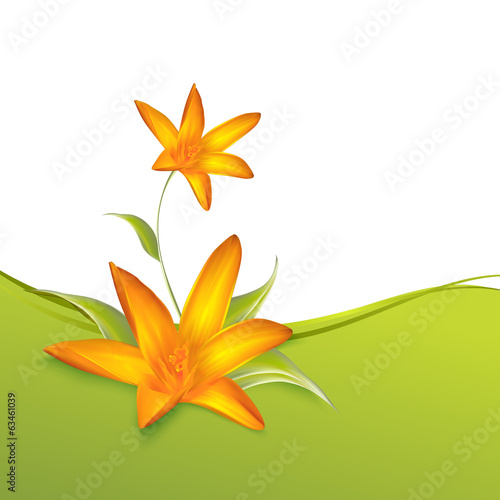 Crocus spring flowers for your card design.