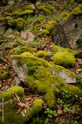 Moss on stone in forest