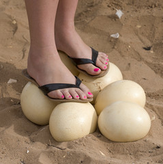 Woman standing on Ostrich eggs