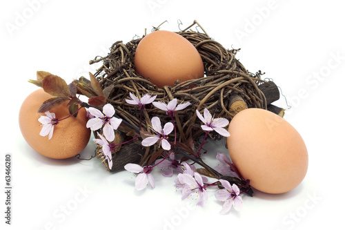 eggs in a nest with blossom
