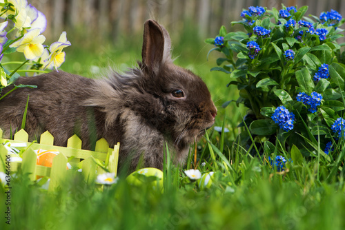 canvas print picture Osterhase
