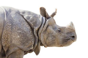 Isolated Profile of a Rhinoceros