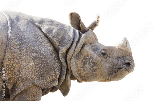 Isolated Profile of a Rhinoceros