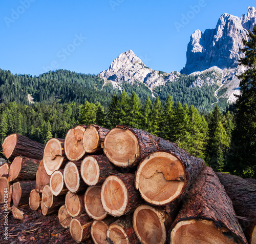 timber logging in Austrian Alps