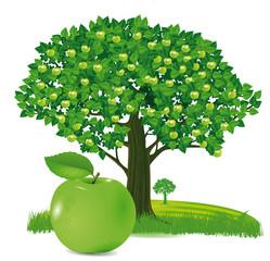 Apfel mit Apfelbaum