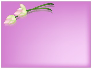 Pink Lotus Flower on A Pink Background