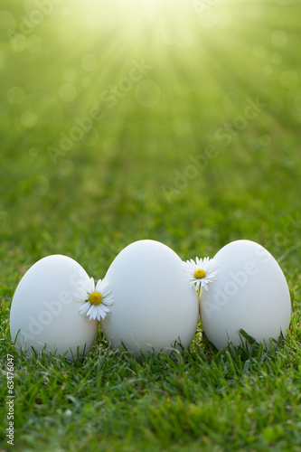 eggs and white flower in the fresh spring grass