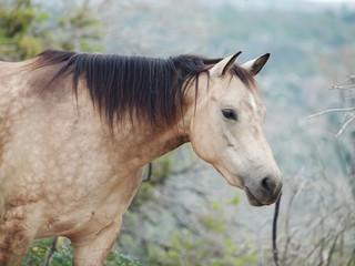 portait of buckskin  horse at freedom