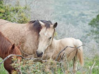 wild herd in mountain. Israel