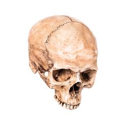 Skullbone model
